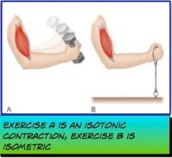 isometric vs isotonic contractions
