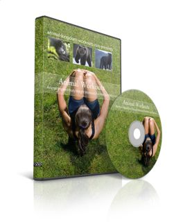 Power Isotonic DVD