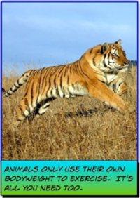 tiger running