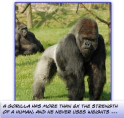 Gorrilla's incredible strength doesn't come from weight lifting