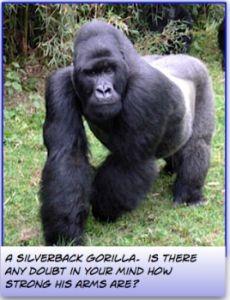 What arm exercises do Gorilla's do?