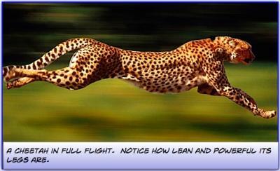 Perform natural leg exercises like the Cheetah