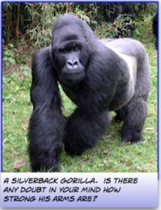 What arm exercises do Gorilla's do?