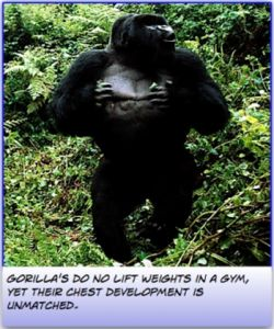 Gorillas don't do their chest exercises in a gym.