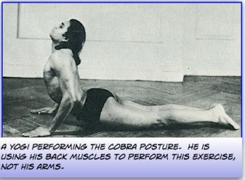 lower back exercises - cobra pose