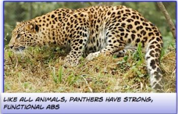 panthers have powerful ABS
